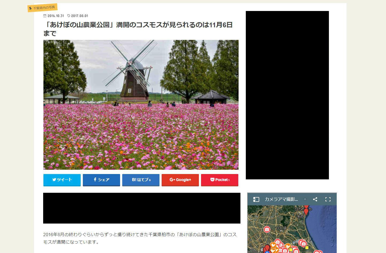 風車の前に満開のコスモスが咲き乱れる「あけぼの山農業公園」