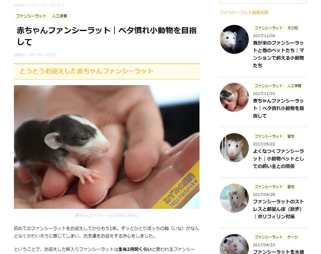 赤ちゃんファンシーラットベタ慣れ小動物を目指して