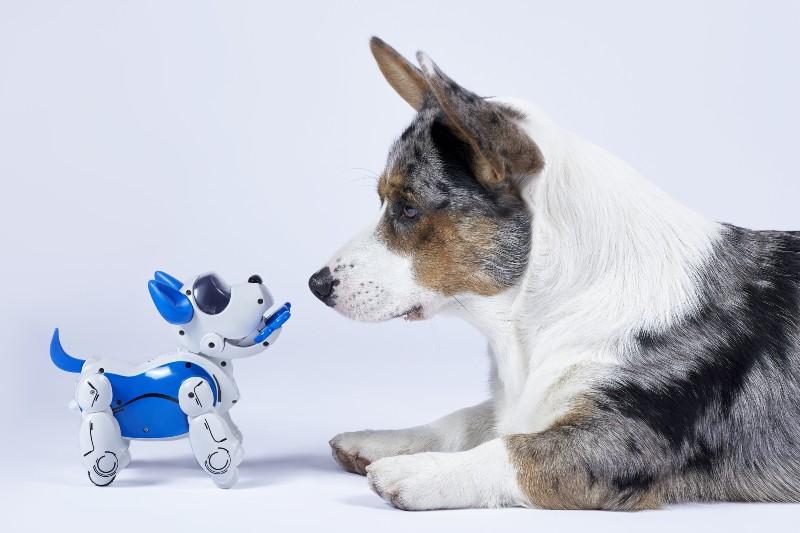 動物ロボットイメージTOP